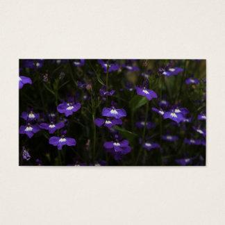 ロベリア、暗い背景が付いている紫色の花 名刺