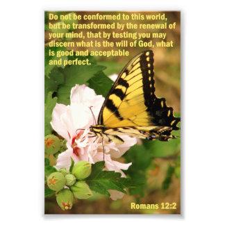 ロマンの12:2の蝶 フォトプリント