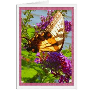 ロマンスレズビアン カード