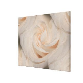 ロマンチックでエレガントなアイボリーの白いバラのコラージュの写真 キャンバスプリント