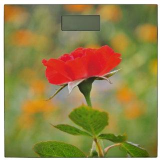 ロマンチックなばら色の花#9 体重計