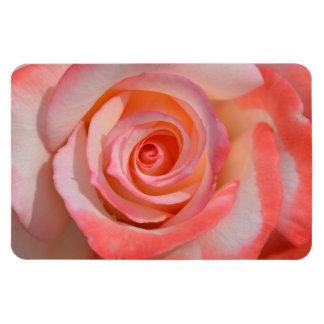 ロマンチックなピンクおよび白いバラ マグネット