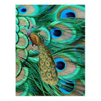 ロマンチックなヴィンテージのターコイズのティール(緑がかった色)の孔雀の結婚式 ポストカード