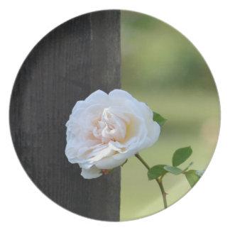 ロマンチックな白いバラ プレート