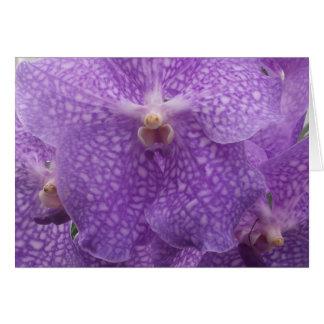 ロマンチックな紫色の蘭 カード