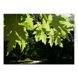 ロンドンの平らな木 カード