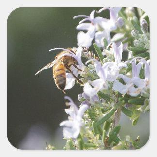 ローズマリーの植物の蜂 スクエアシール
