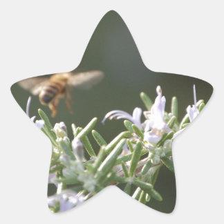ローズマリーの蜂 星シール