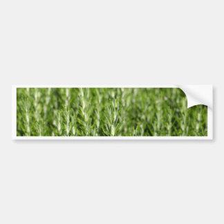 ローズマリー(Rosmarinusのofficinalis)の枝 バンパーステッカー