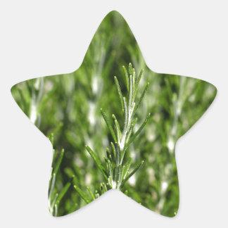 ローズマリー(Rosmarinusのofficinalis)の枝 星シール