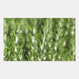 ローズマリー(Rosmarinusのofficinalis)の枝 長方形シール