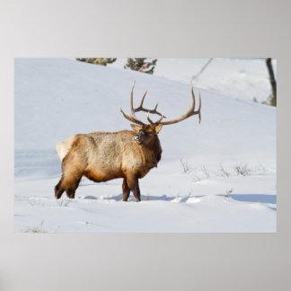 ワイオミングのイエローストーン国立公園、Bullのオオシカ ポスター