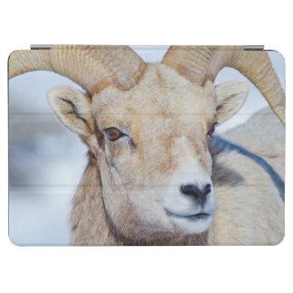 ワイオミングの国民のオオシカの非難、オオツノヒツジのラム iPad AIR カバー