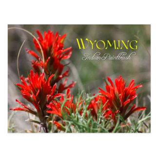 ワイオミングの州花: インドペイントブラシ ポストカード