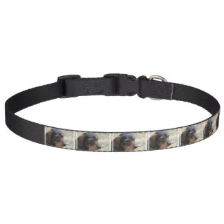 ワイヤー髪のDaschund犬 ペット首輪