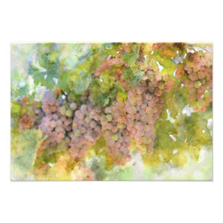 ワインを作ること準備ができたつる植物のブドウ フォトプリント
