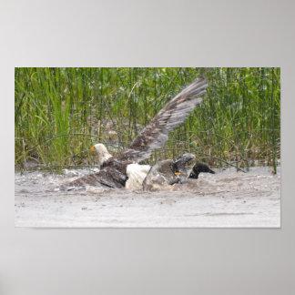 ワシの攻撃の水潜り鳥 ポスター
