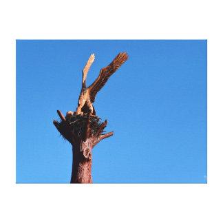ワシの木製の切り分けるジョージタウンタスマニアオーストラリア キャンバスプリント