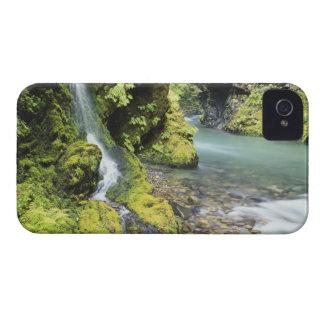 ワシントン州の季節的なオリンピック国立公園 Case-Mate iPhone 4 ケース