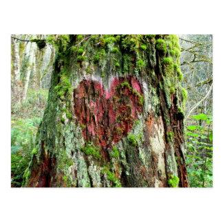 ワシントン州の郵便はがき: 愛の木 ポストカード