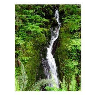 ワシントン州の郵便はがき: Quinaultの熱帯雨林 ポストカード
