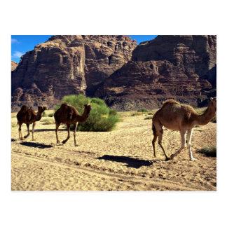 ワジのラム酒、ヨルダンの砂漠の砂漠のラクダ ポストカード