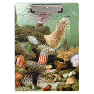 ヴィンテージのいそぎんちゃく、海洋生物動物