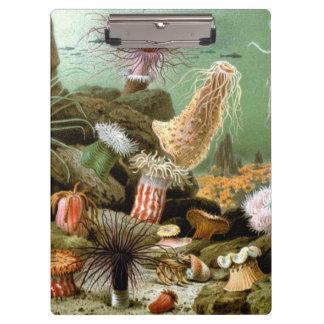 ヴィンテージのいそぎんちゃく、海洋生物動物 クリップボード