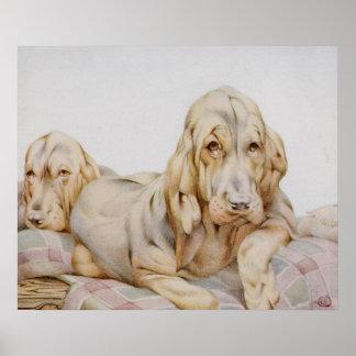 ヴィンテージのかわいいブラッドハウンド、EJ Detmoldによる小犬 ポスター