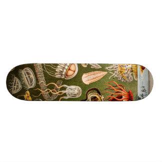 ヴィンテージのくらげの旧式なクラゲのイラストレーション スケートボード