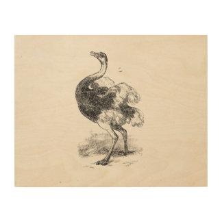 ヴィンテージのだちょうの鳥の名前入りな鳥のだちょう ウッドウォールアート