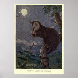 ヴィンテージのふくろねずみPainting (1909年) ポスター