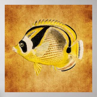 ヴィンテージのアライグマの蝶魚-旧式なハワイアン ポスター