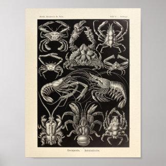 ヴィンテージのエビのエルンスト・ヘッケルの芸術のプリント ポスター