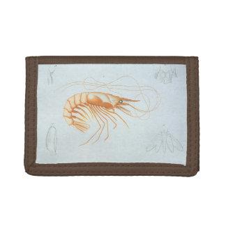 ヴィンテージのエビの解剖学、海洋生物の海動物 ナイロン三つ折りウォレット