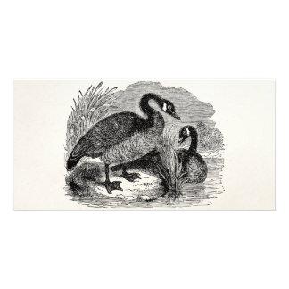 ヴィンテージのカナダのガチョウの鳥-ガチョウの鳥のテンプレート カード