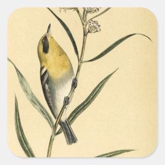ヴィンテージのキイロアメリカムシクイの鳥 スクエアシール