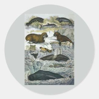 ヴィンテージのクジラ、シールおよびセイウチの海生動物 ラウンドシール