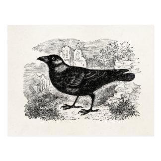 ヴィンテージのコクマルガラスのカラスの鳥の名前入りな鳥のカラス ポストカード