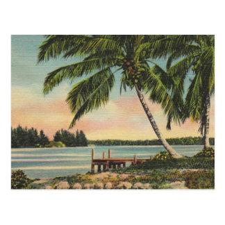 ヴィンテージのココヤシの木 ポストカード