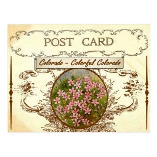 ヴィンテージのコロラド州の州花の郵便はがき ポストカード