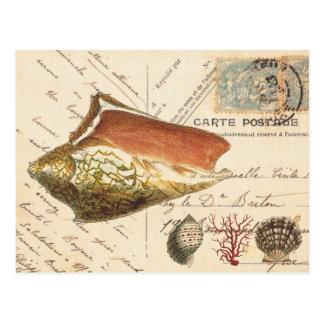 ヴィンテージのコンシュの貝および貝殻の郵便はがき ポストカード