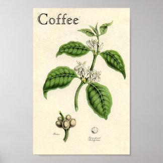 ヴィンテージのコーヒー植物 ポスター