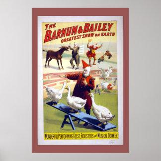 ヴィンテージのサーカスのガチョウ、オンドリおよびろば ポスター