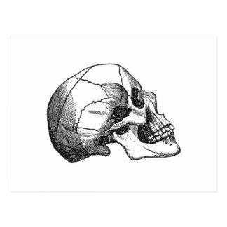 ヴィンテージのスカルのプロフィールのイラストレーション ポストカード