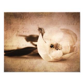 ヴィンテージのセピア色のマグノリアの花の花柄の花 フォトプリント