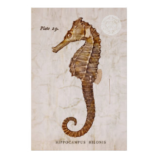 ヴィンテージのタツノオトシゴ-カスタマイズ旧式なタツノオトシゴ ポスター