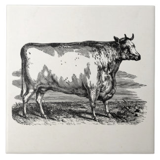 ヴィンテージのダラム牛Bullの名前入りなイラストレーション タイル