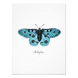 ヴィンテージのティール(緑がかった色)の青い蝶イラストレーション- 1800's フォトプリント