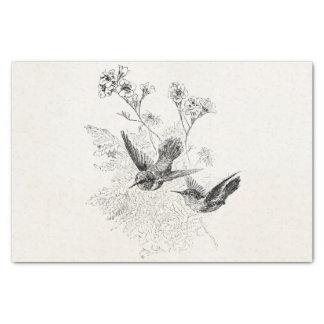 ヴィンテージのハチドリの旧式な鳥のテンプレート 薄葉紙